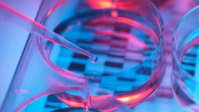 Анализы ДНК